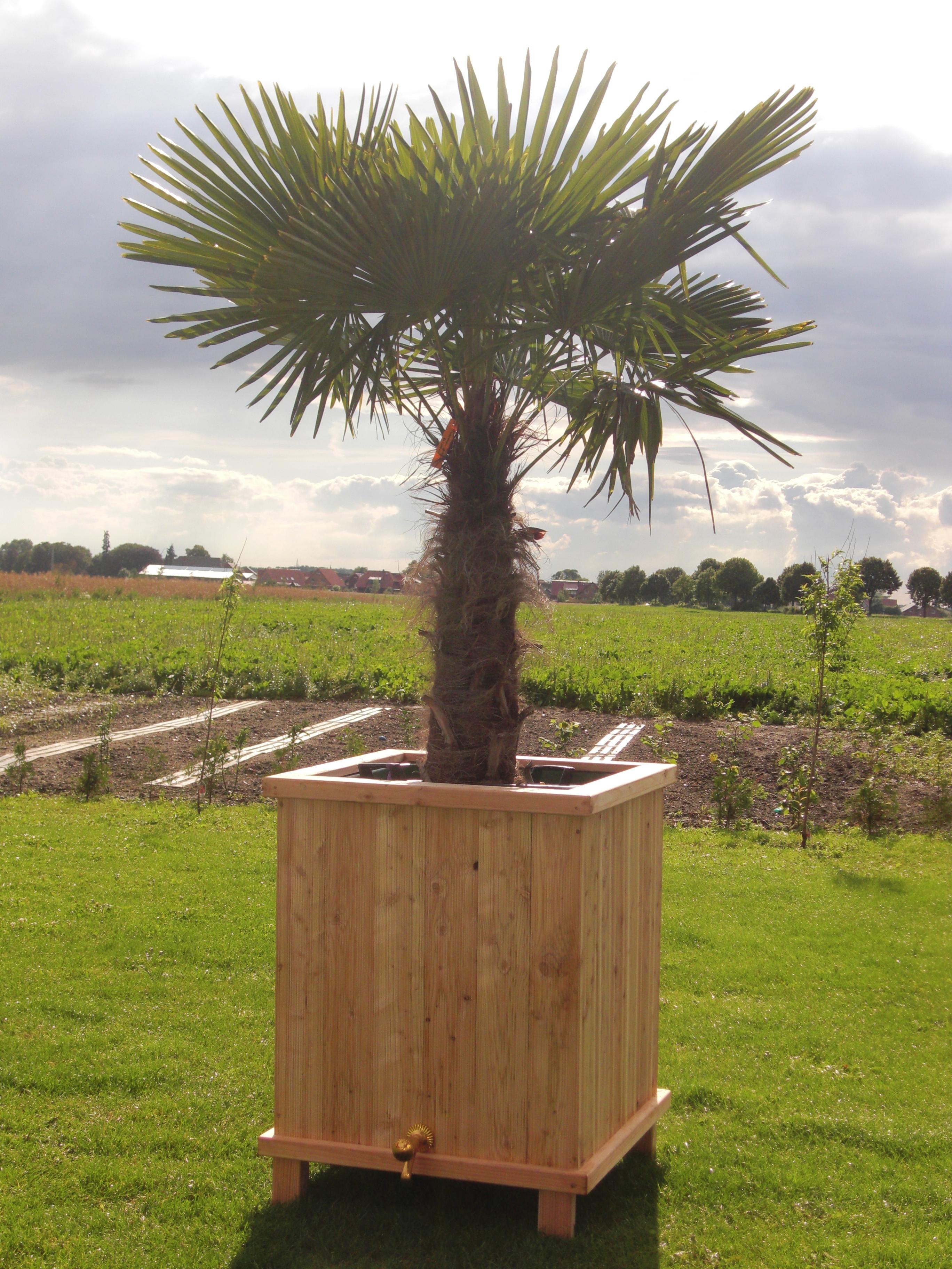 Große Pflanzkübel Für Palmen.Beheizte Pflanzkübel Für Pflanzen Heizung Für Pflanzkübel